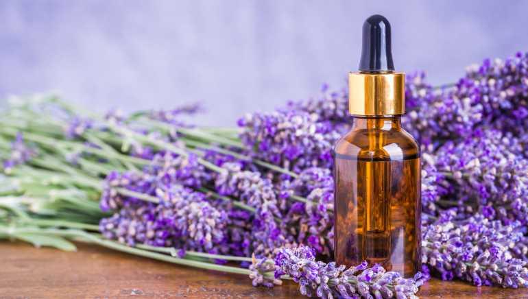 Tinh dầu oải hương được chiết xuất từ hoa oải hương tự nhiên nguyên chất