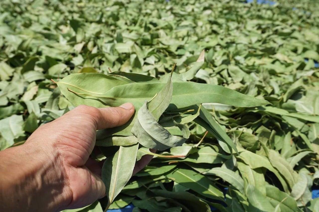 Nguyên liệu thảo mộc sản xuất nhang sạch An An